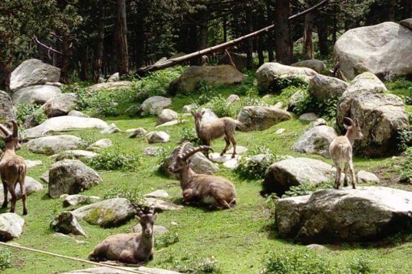 Parc animalier des Angles Les Chalets Secrets